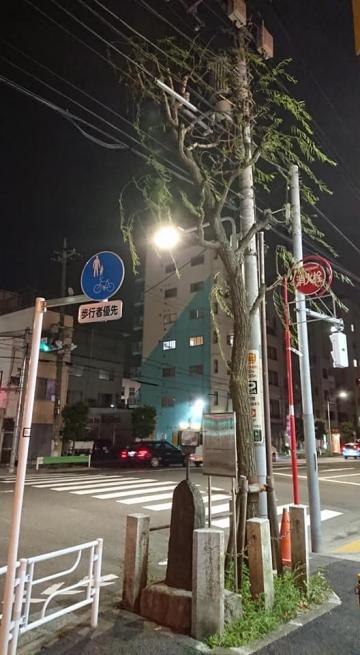 Mikaeriyanagi